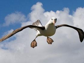 Kuşlardaki süzülme teknikleri