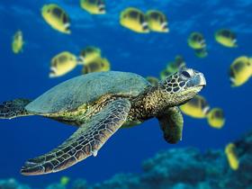 Göç Eden Kaplumbağalar