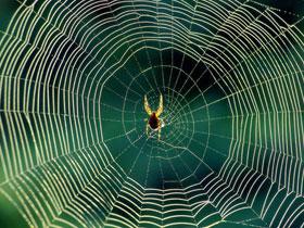 Allah'ın yaratma sanatının tecellileri: Örümcek