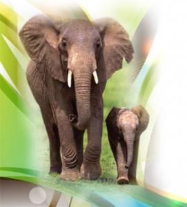 Afrika Savanlarındaki Hayvanların Göçü