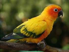 Güneş Kuşları