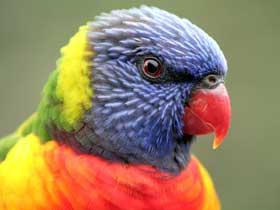 Macaw Papağanlarının Zehiri Etkisiz Hale Getirme Yöntemleri