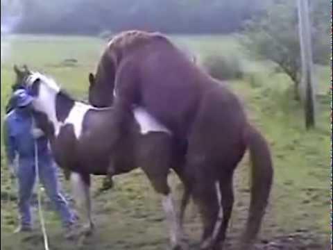 Atların Çifleşmesi