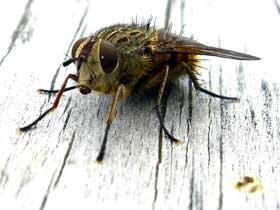 Böceklerde Yavrularını Koruma Hissi