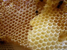 Arılar balmumunu nasıl üretirler