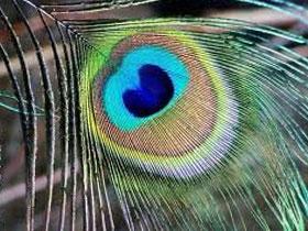 Kuş tüylerindeki şaşırtan tasarım