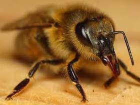 Teknolojik bilgilere sahip arılar