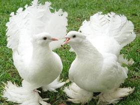Güvercinlerde manyetik konumlandırma sistemi