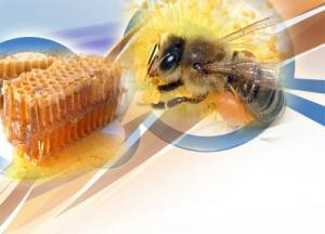 Arıların Yaratılış Özellikleri Tıbba İlham Kaynağı Oluyor
