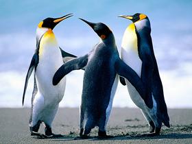 Penguenlerin Vücut Sıcaklığı