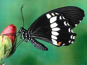 Kelebek Gözündeki Tasarım