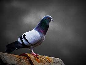 Hayvanların Sahip Oldukları Hassas Duyular