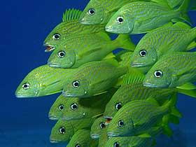 Balıkların Duyu Yeteneği