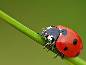 Kınkanatlı Böcekler