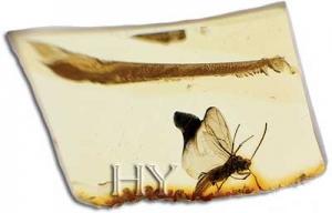 Karıncaların antibiyotik üretebildiklerini biliyor muydunuz?