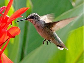 Sinek Kuşları