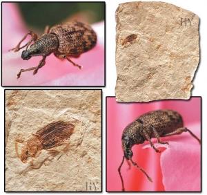 Hortumlu Böcek
