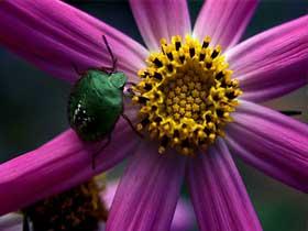 Böceklerdeki Proteinler Bitkilerin Daha Hızlı Gelişmesini Sağlar