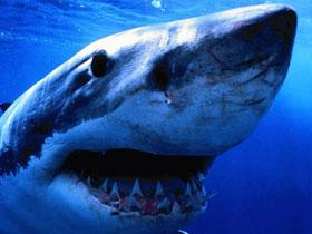 Elektrik akımlarına duyarlı köpek balıkları