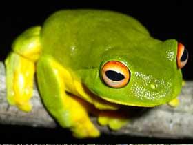 Kurbağa Gözleri – 2
