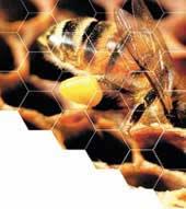 Kovan içinde bir lider: Kraliçe arı