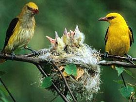 Kuşların ilgi çekici yuvaları