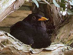 Kuşlarda Yavru Sevgisi