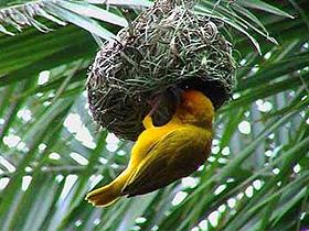 Kuş Yuvaları