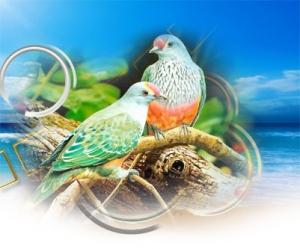 İlginç Beslenme Tekniklerine Sahip Kuşlar