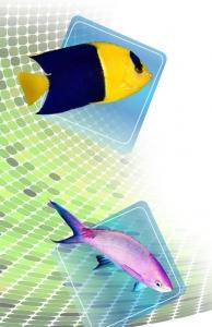 Balıkların Solunum Sistemlerindeki Kusursuz Detaylar