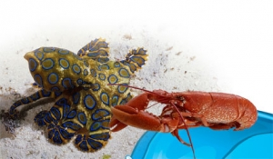 Teknolojiye İlham Kaynağı Olan Deniz Canlıları