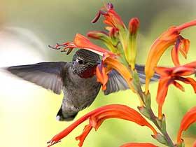 Sinek Kuşları – 2