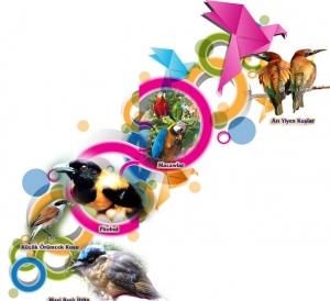 Kuşlar Kendilerini Hangi Taktiklerle Korurlar?