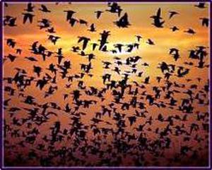 Hayvanların göç öncesi, kendilerini yolculuğa hazırladıklarını biliyor muydunuz?