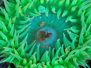 Mercan Polipleri