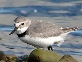 Su Kenarında Avlanan Kuşlar