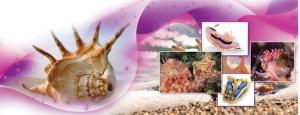 Bazı Deniz Canlılarındaki Yaratılış Özellikleri