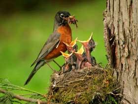 Kuşların Yavrularını Besleme Şekilleri