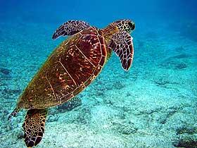 Yılan Boyunlu Kaplumbağalar
