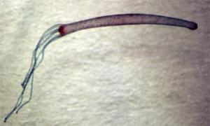 Evrimcilerin Hydra İsimli Canlı Hakkındaki Hayalperest ve Dogmatik İddiası