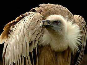 Farklı Kanat Şekillerine Sahip Kuşlar