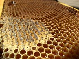 Arı kovanındaki mükemmel organizasyon