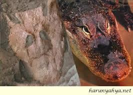 Tiktaalik Roseae Darwinistler tarafından nasıl sahte bir ara fosil haline dönüştürüldü?
