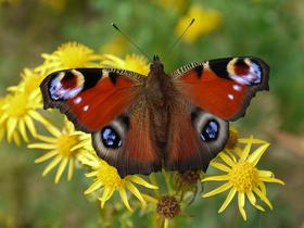Kelebeklerin Kanat Desenleri