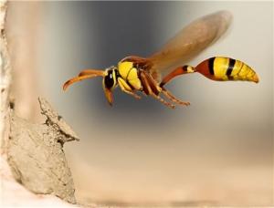 Böceklerdeki üstün uçuş sistemleri