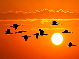 Kuşların Göç Yolları