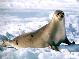 Kutup canlılarından hayatta kalma taktikleri