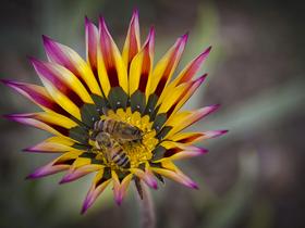 Haberci Arılar