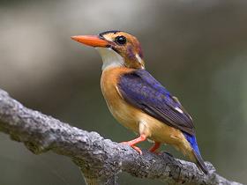 Su İçindeki Hayvanlarla Beslenen Kuşlar