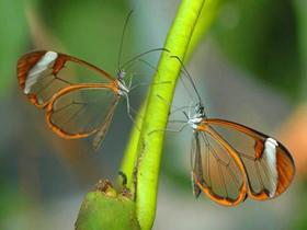 Kelebeklerin Uzun Dilleri